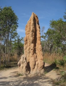 Cathedral_Termite_Mound_-_brewbooks